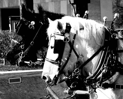 Photograph - Horses by Jessica J Murray