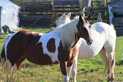 Horses Art Print by Mike Stouffer