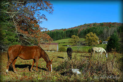 Photograph - Horses Of The Blue Ridge Mountains by Sheila Kay McIntyre