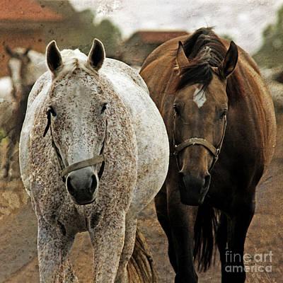 Horses On The Paddock Art Print by Angel  Tarantella