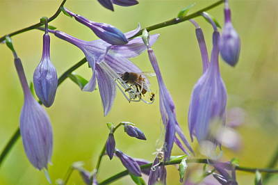 Photograph - Hosta Blossom-bee-ant by Mary McAvoy