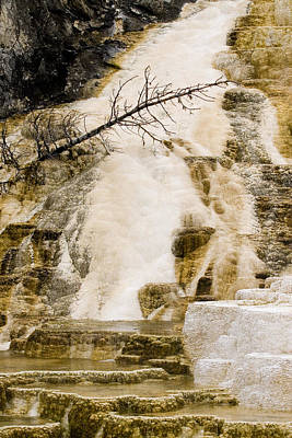 Art Print featuring the photograph Hot Spring Pine by J L Woody Wooden