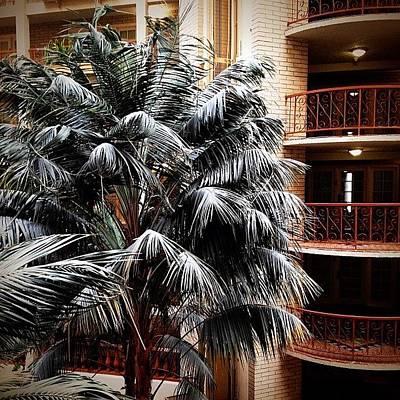 Austin Photograph - Hotel Palm by Natasha Marco