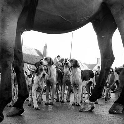 Foxhound Photograph - Hounds And Horse by John Chillingworth
