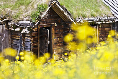 House Behind Yellow Flowers Art Print