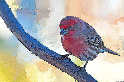 Finch Mixed Media - House Finch IIi Painted Effect by Debbie Portwood