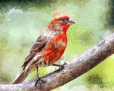 Finch Digital Art - House Finch Perched . 40d7930 by Wingsdomain Art and Photography
