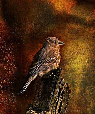 Digital Art - House Finch With Sunflower Seed by J Larry Walker