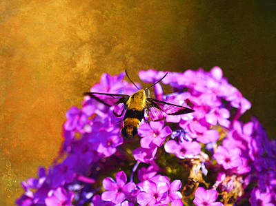 Digital Art - Hovering Clearwing by J Larry Walker