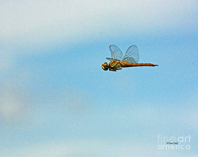 Photograph - Hovering Dragonfly by Terri Mills