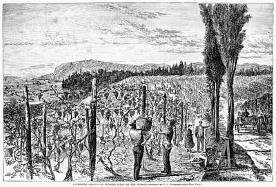 Hudson River Vineyard, 1867 Art Print