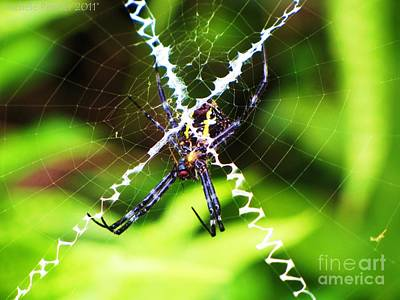 Photograph - Huge Orb Weaver by Michele Penner