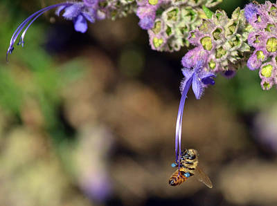 Bee Collects Nectar Photograph - Huge Undertaking by Fraida Gutovich