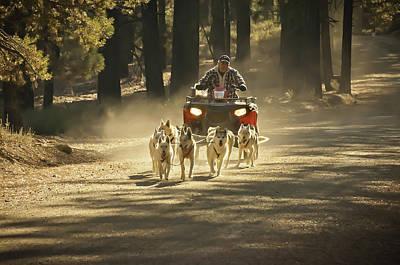 Photograph - Hugo's Huskies 2 by Sherri Meyer