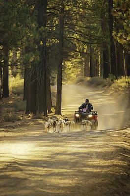 Photograph - Hugo's Huskies by Sherri Meyer