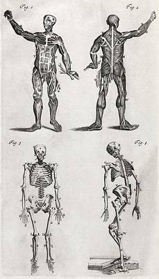 1704 Photograph - Human Anatomy, 18th Century Artwork by Middle Temple Library