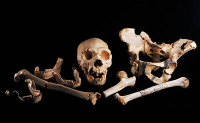 Human Fossils, Sima De Los Huesos Art Print by Javier Truebamsf