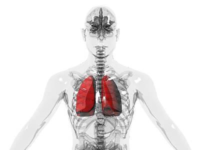 Human Lungs Art Print by Christian Darkin