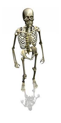 Human Skeleton, Artwork Art Print by Friedrich Saurer