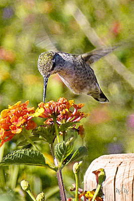 Photograph - Hummer And Lantana 2 by Marie Morrisroe