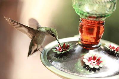 Photograph - Hummingbird 1 by Pan Orsatti