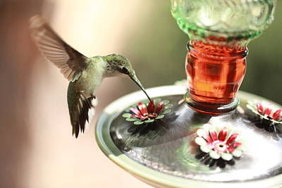 Photograph - Hummingbird 2 by Pan Orsatti