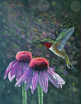Drawing - Hummingbird And Cone Flowers by Diana Shively