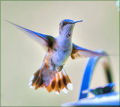 Hummingbird At The Feeder Art Print by Shirley Tinkham