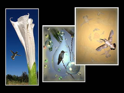 Photograph - Hummingbird Collage 2009 by Joyce Dickens