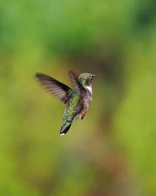 Hummingbird Photograph - Hummingbird Flying Away by Jai Johnson