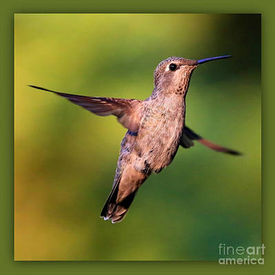 Photograph - Hummingbird Hello by Carol Groenen
