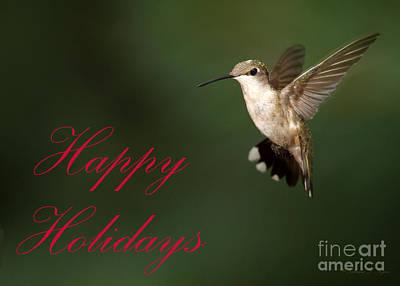 Photograph - Hummingbird Holiday Card by Sabrina L Ryan