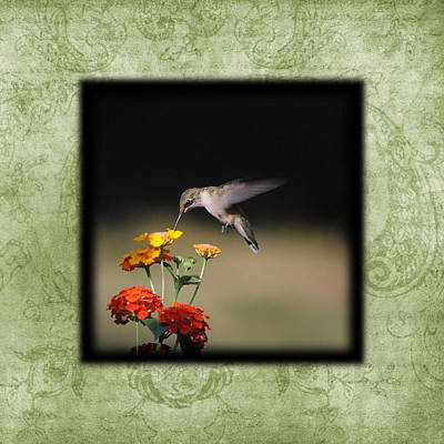Photograph - Hummingbird I Photo Square by Jai Johnson