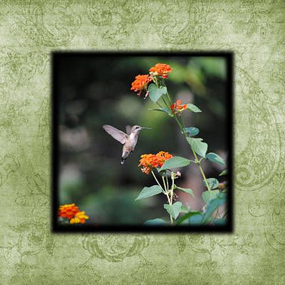 Photograph - Hummingbird II Photo Square by Jai Johnson