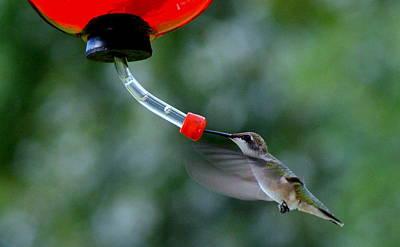Hummingbird Art Print by Lois Lepisto