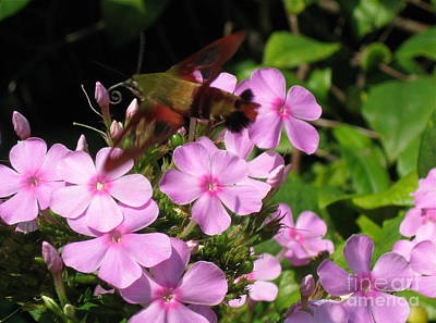 Art Print featuring the photograph Hummingbird Moth  by Nancy Patterson