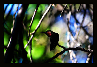 Art Print featuring the photograph Hummingbird Resting On A Twig by Susanne Still