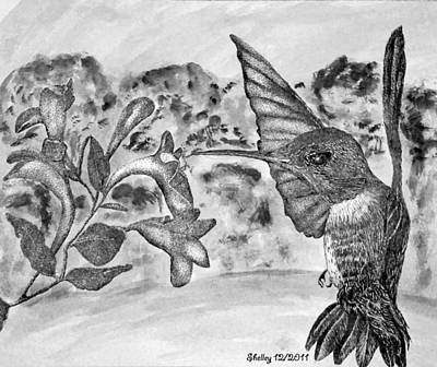 Drawing - Hummingbird by Shelley Bain