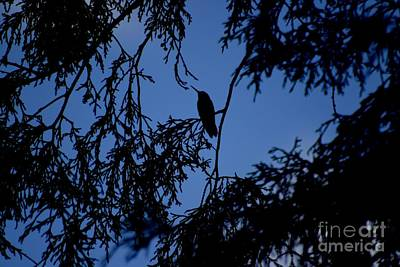 Photograph - Hummingbird Silhouette by Living Color Photography Lorraine Lynch