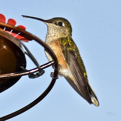 Hummingbird Art Print by Teresa Dixon