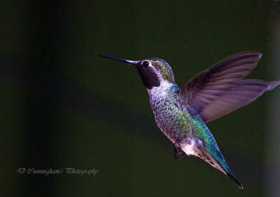 Photograph - Hummingbird's Visit by Dorothy Cunningham
