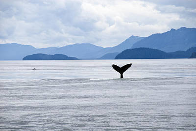 Humpback Whale Megaptera Novaeangliae Art Print by James Forte