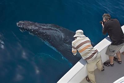 Photograph - Humpback Whale Near Surface And Whale by Suzi Eszterhas