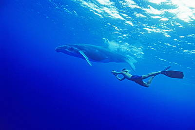Rurutu Photograph - Humpback Whale With A Snorkeler by Alexis Rosenfeld