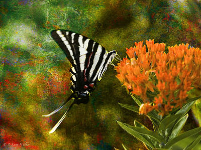Digital Art - Hungry Little Butterfly by J Larry Walker
