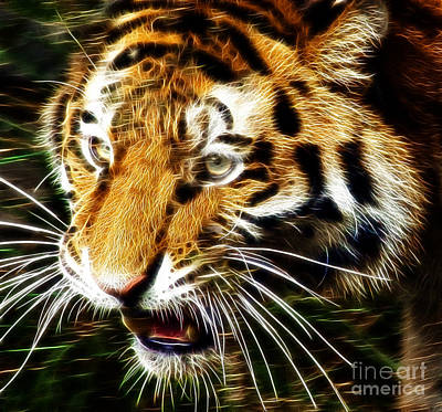 Tiger Fractal Photograph - Hungry Tiger by Darleen Stry
