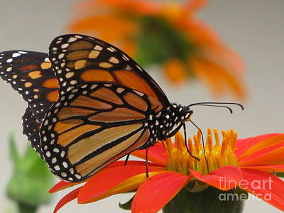 Art Print featuring the photograph Hungry by Tina Marie