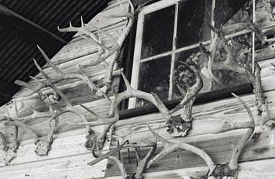 Floyd Smith Photograph - Hunters Deer Horns On Shed by Floyd Smith