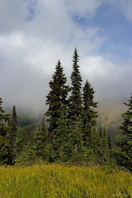 Photograph - Hurricane Ridge Beauty by Heidi Smith