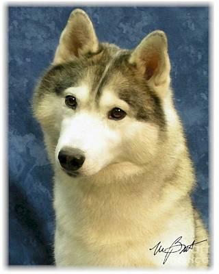Siberian Husky Digital Art - Husky Portrait by Maxine Bochnia